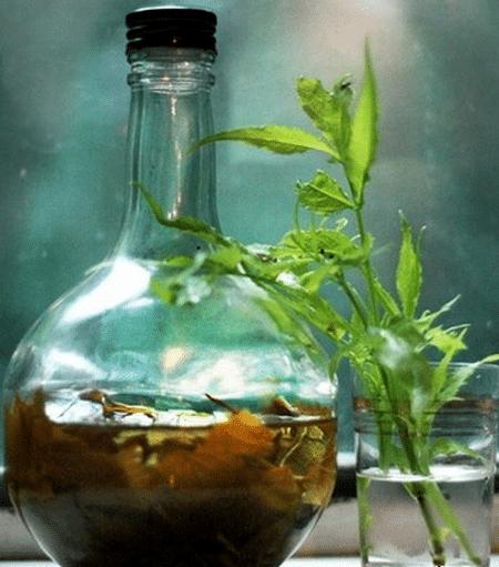Домашняя спиртовая настойка пиона готовится в течение 20 дней