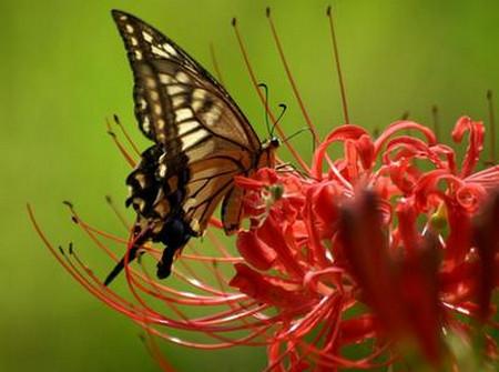 Изящная, словно бабочка