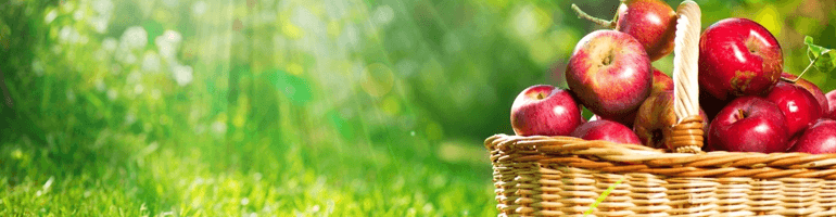 Яблочная диета на 3 дня поможет похудеть быстро и эффективно
