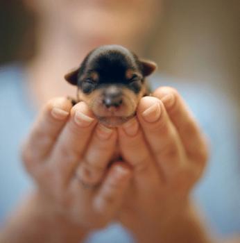 Если вам нужно найти применение своей заботливости – заведите щенка